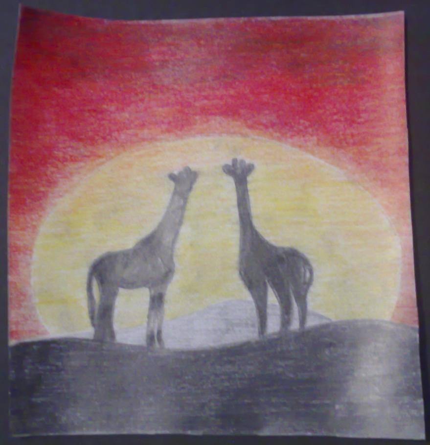 Giraffe Silhouette Giraffe Silhouette Sunset by