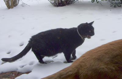 Cat objects to snow. by Jany1982