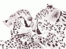 Cheetah Kiss by minime2210