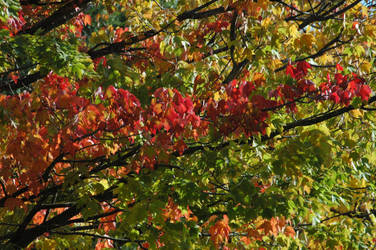 .: Fall Color :.