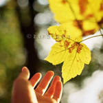 touch by zora-iuga