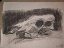 Animal Skull by darkkairi777