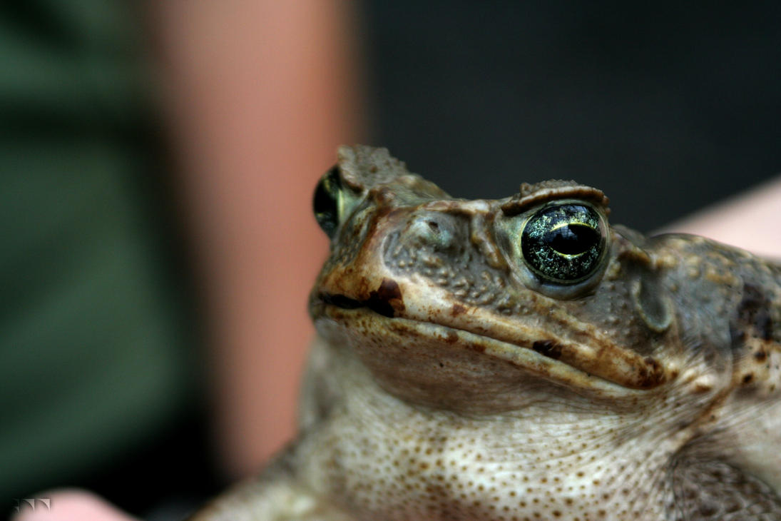 Toad 1 by robertllynch