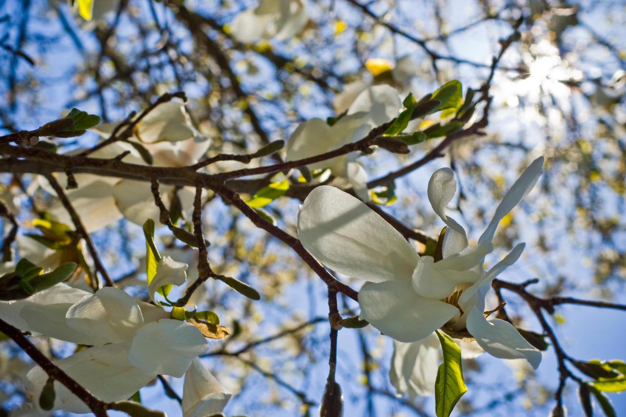 Floral 14 by robertllynch