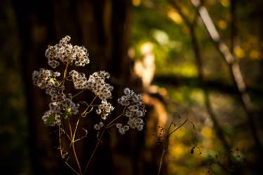 Floral 45 by robertllynch