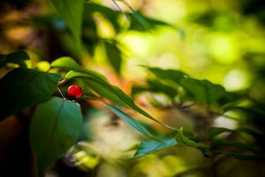 Berry by robertllynch