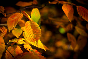 Autumn Leaves by robertllynch