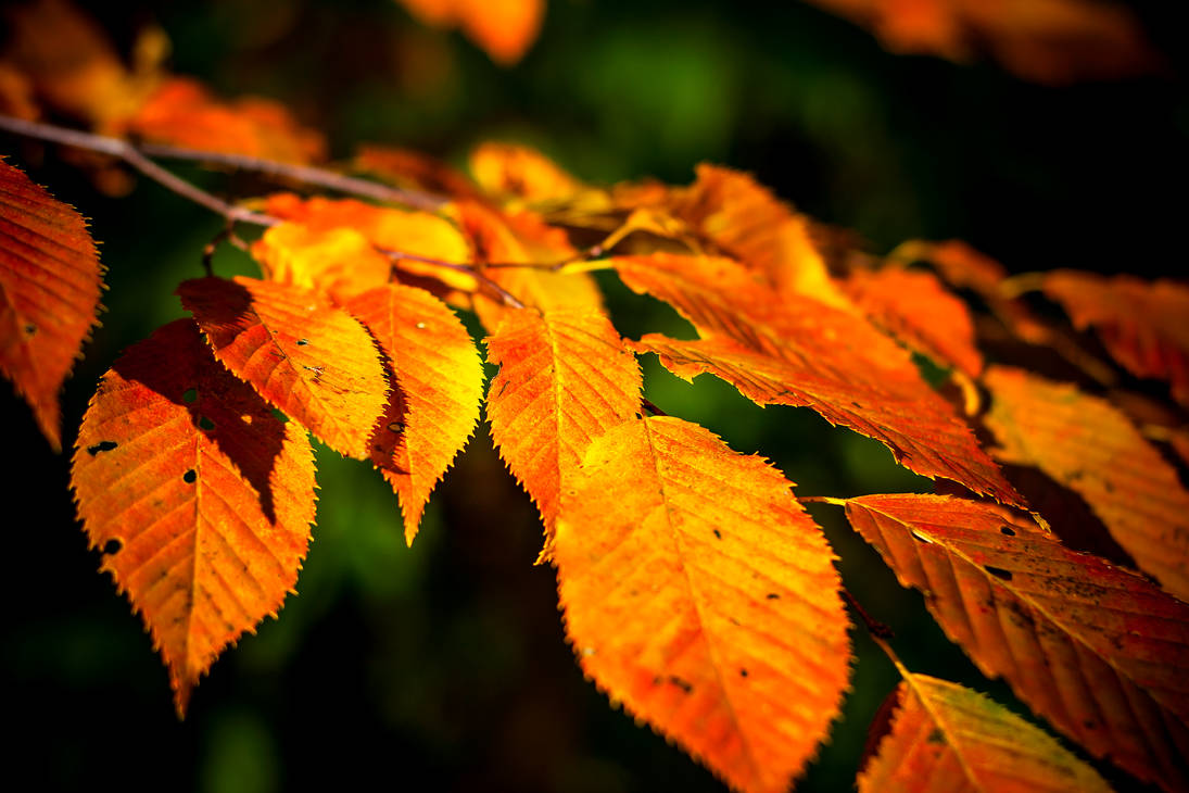 Autumn Leaves 2 by robertllynch
