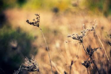 Grassland by robertllynch