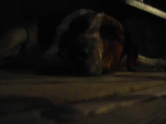 Cosmo The Sleeping Dog by davidcelticwerewolf