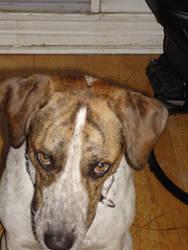Puppy dog eyes by davidcelticwerewolf
