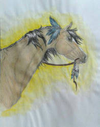 buckskin Indian pony