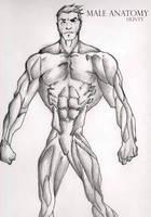 Male Anatomy huntyARTIST by huntyARTIST