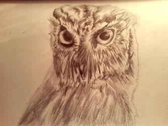 Owl by huntyARTIST