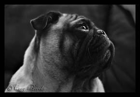 Love Pug by WickedNox
