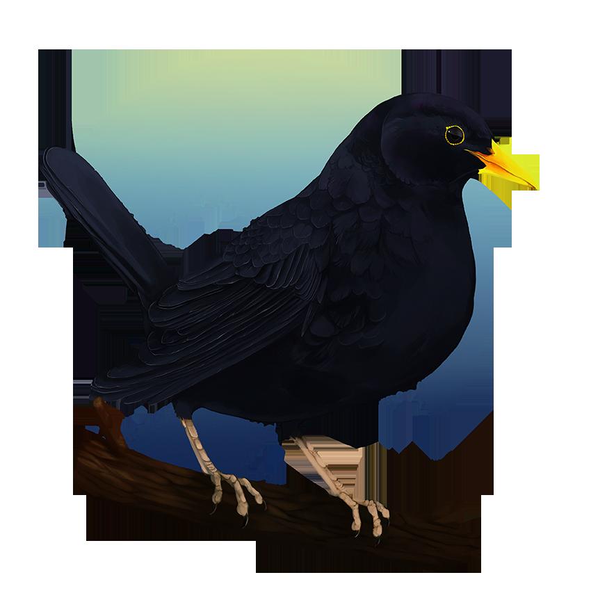BlackBird by urukins