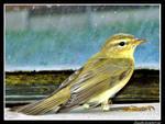 Little bird II