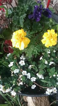 Photo - Yellow and White Smile