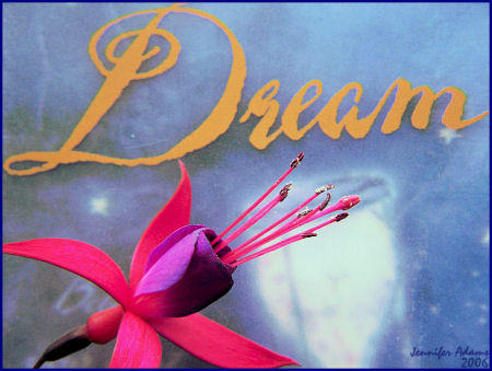 Dream by WinterRose31