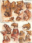 Bear::charater concepts