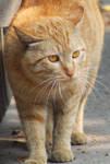golden cat by queely