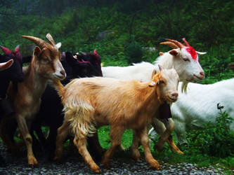 Goats on Fairy Mountain 2 by queely