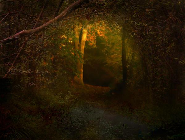 Woodlands by emilieleger
