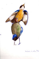 Sexy Birds by Crazyrockgirl