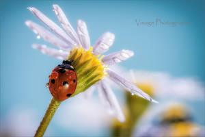Little Sun Shade by GJ-Vernon