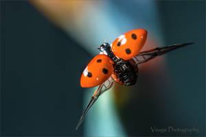 Flight of The Lady Bird by GJ-Vernon