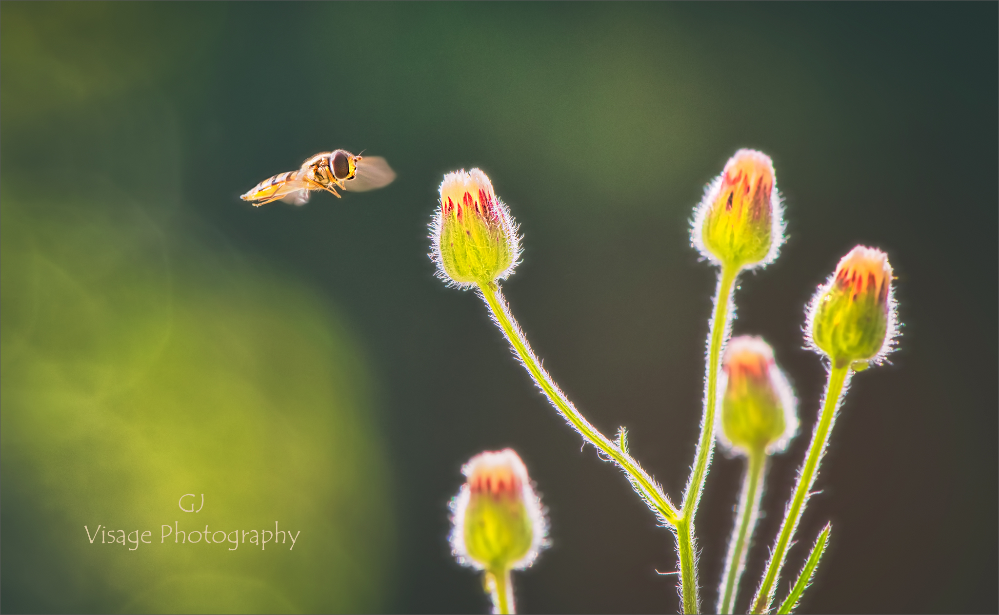 Meadow Flight by GJ-Vernon