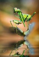 El Mantis by GJ-Vernon