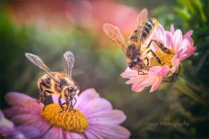 Nectar Frenzy by GJ-Vernon