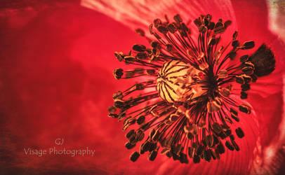 Heart of  Poppy by GJ-Vernon