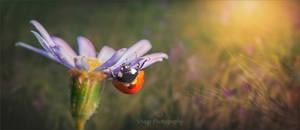 Sundown Meadow