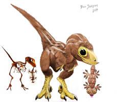 Study of baby Velociraptor