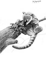 Coati and spider, nom nom nom by Psithyrus