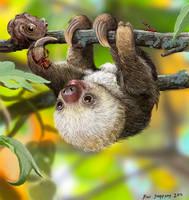 Nature's Kawaii, Baby sloth by Psithyrus