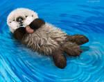Sea Otter Awareness Week, Newborn Otter Pup