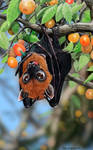 A Flying Fox Thanksgiving