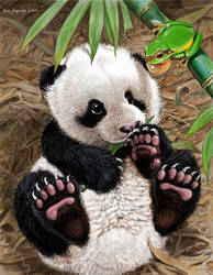 PANDA CUB WATCHES CUTE GREEN TREE FROG by Psithyrus
