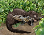 Giant river otter pup and his caiman buddy