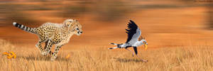 Cheetah and Secretary Bird: The Great Cheeto Chase
