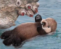 baby sea  otter and barnacles, Intertidal High-5