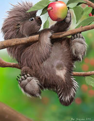 Baby Porcupine Loves MacIntosh Apples