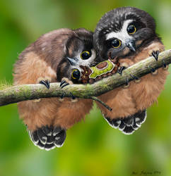 Baby Saw Whet Owls and Saddleback Caterpillar