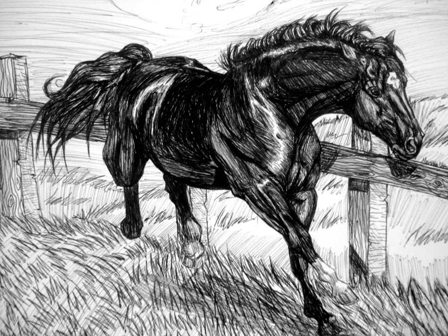 horse drawn in pen by AlmightyShadow