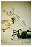 Insect vs Spider by Afri