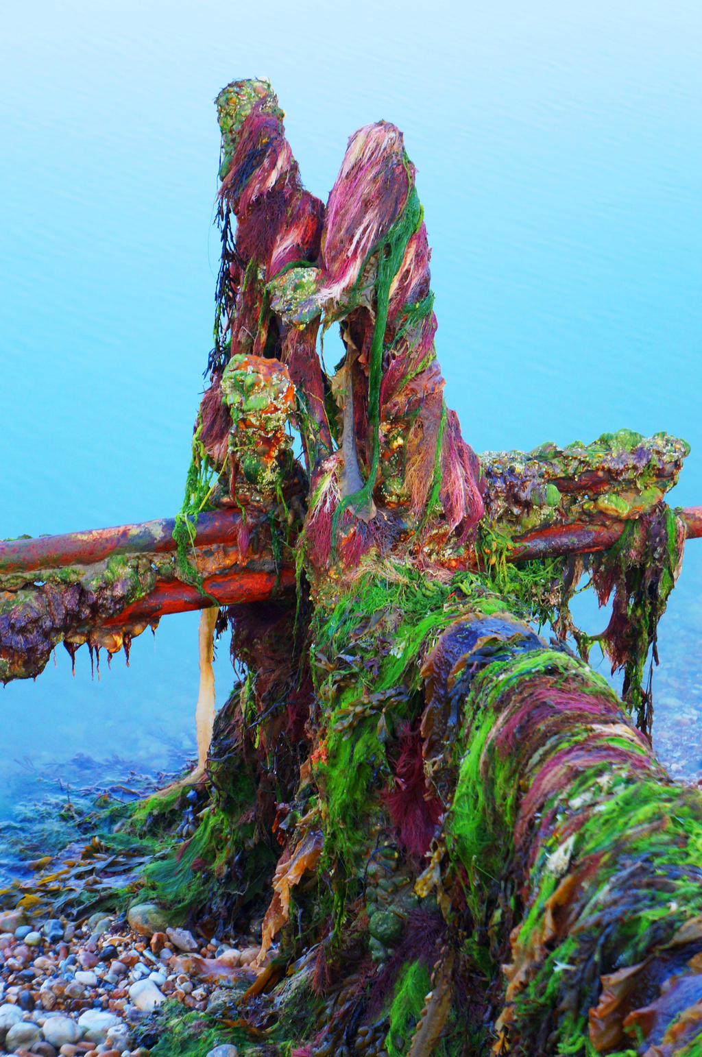 Seaweed by hayleyonfire