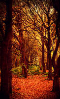 Autumn woods by hayleyonfire